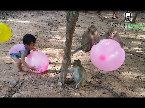 monkey fight to get ballon from little boys, monkey hit little boy cry, funny video monkey