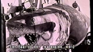 Movie Magic - Aqua Animatronics
