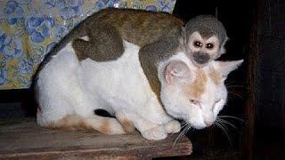 Monos Chistosos Molestando A Perros Y Gatos - Videos De Animales Graciosos