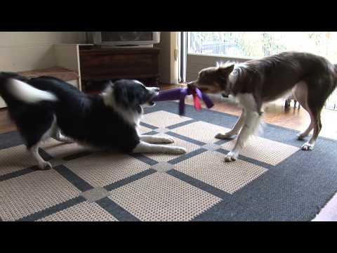 Dit kun je ook jouw hond leren!