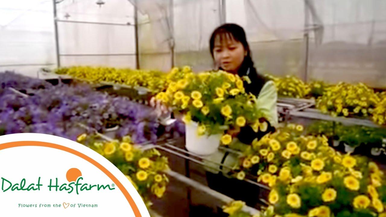 [Flowers TV] Cách chăm sóc hoa Ngàn Chuông