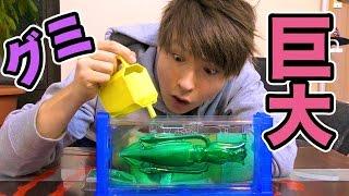 巨大深海魚グミキットでダイオウイカを作る!! PDS