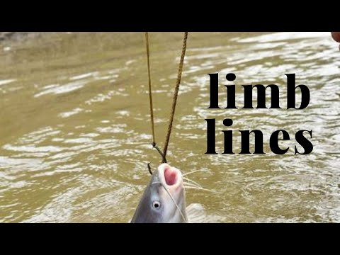 DIY HOMEMADE LIMB LINES  - MISSISSIPPI/MISSOURI RIVERS -