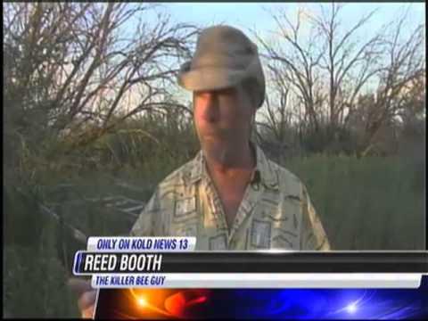 9/15/11 Killer Bees Kill 1000-lb Hog in Bisbee AZ