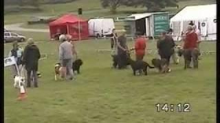 Welsh Festival Of Horse Dog Display