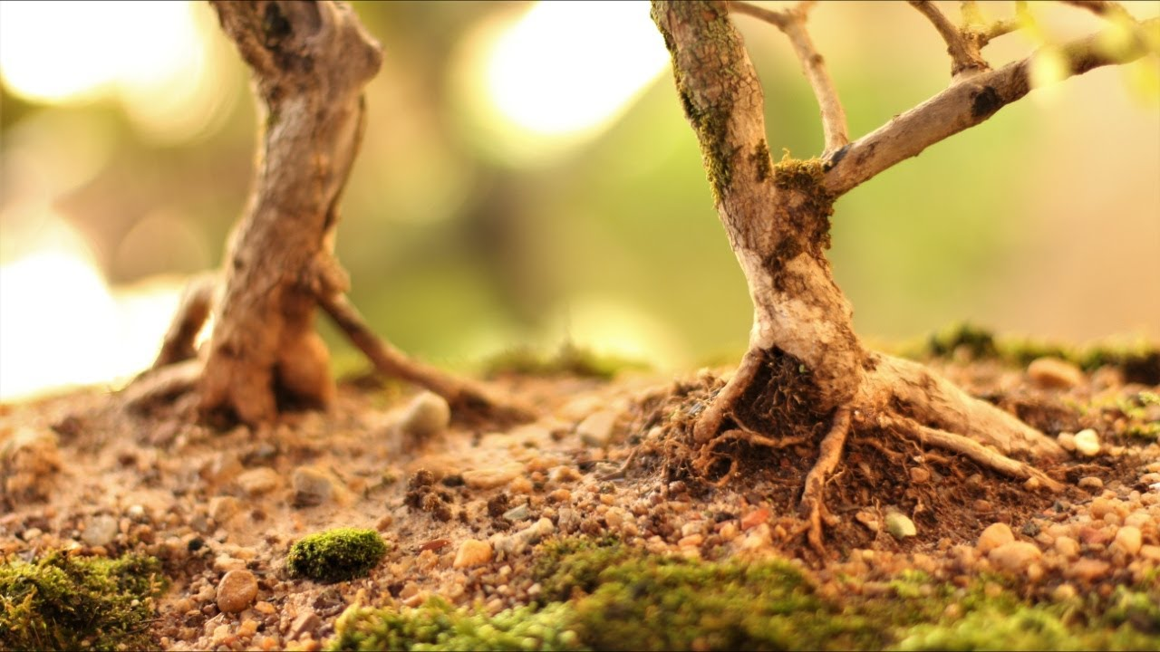 Serra da Canastra - floresta (Duranta Repens) vídeo 4