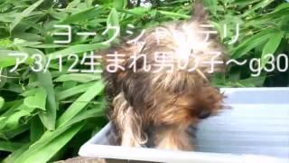 http://www.nara1.jp/item/york160312m001lsgn/ 【16/7/30撮影】 リクエ...