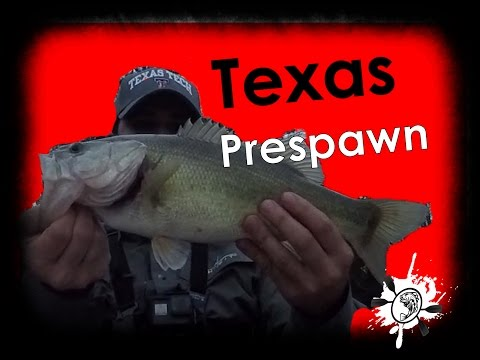 Prespawn Spring Bass Fishing Texas Lake Bob Sandlin