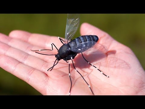 Chagas Disease By Top 5 Deadliest Kissing Bugs - Health Care