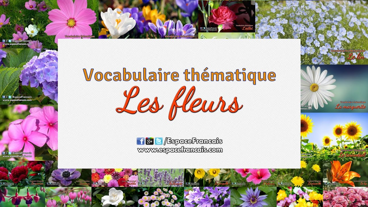 vocabulaire fran ais th matique nom des fleurs audio youtube. Black Bedroom Furniture Sets. Home Design Ideas