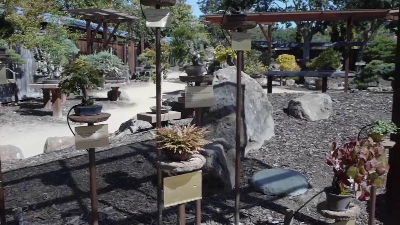 Bonsai Garden At Lake Merritt In San Francisco Ca Youtube