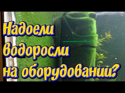 Как избавиться от водорослей в аквариуме! Удаление водорослей с аквариумного оборудования!