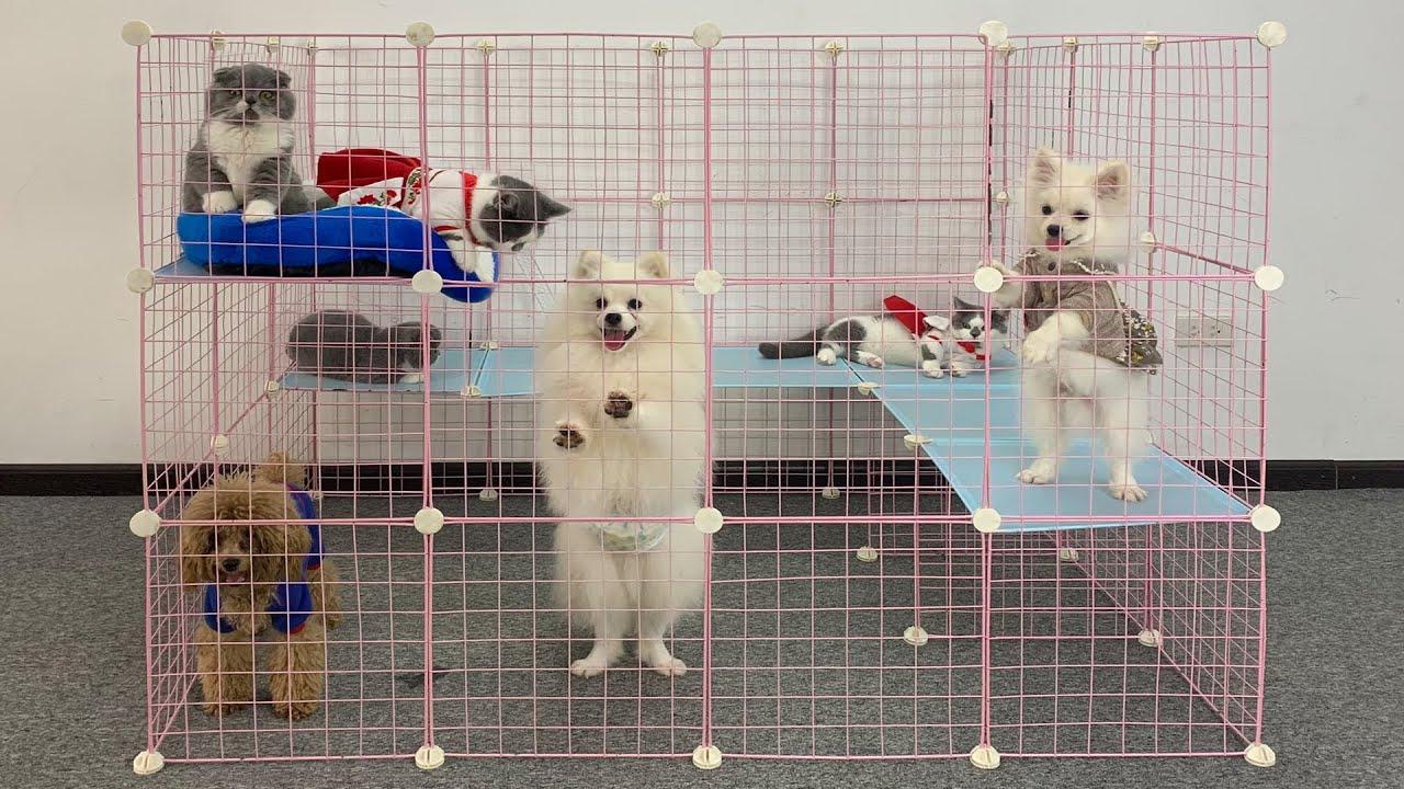 DIY Resort For Cute Munchkin Kitten & Pomeranian Puppies   How To Make House For Dog Cat   MR PET 84