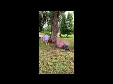 Florida couples uses pet alligator for gender reveal party