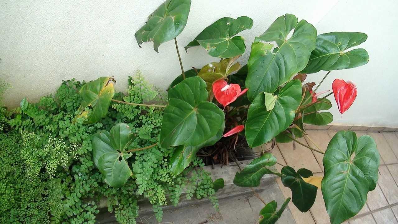 , antúrios e outras plantas e flores no jardim  HD 1080p  YouTube