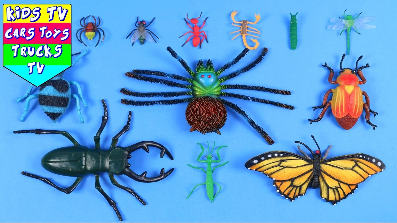 Learn Names And Sounds Of Insects For Kids Children Babies Toddlers With Fly Spider Ant Caterpillar