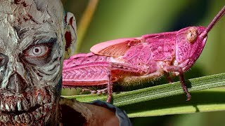 STRANGE Pink Creatures and Zombies