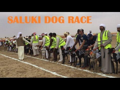 Saluki Dog Race in Dubai