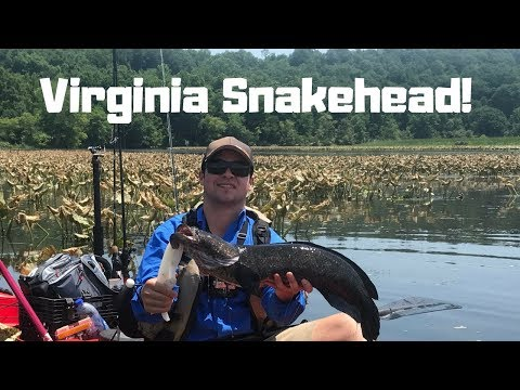 Aquia Creek KAYAK SNAKEHEAD FISHING!