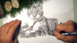 Franfranmaster Speed drawing Animal Portrait 04 - Cross Eyed kitty (Spangles)