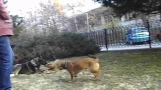 Училище за кучета  Обучение на кучета К9 World Dog School 1