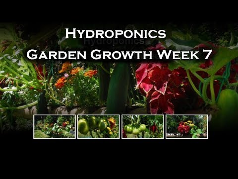 Hydroponics Garden  Week 7 - Solar Powered  Automatic Watering System (NFT)