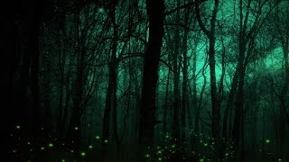 Celtic Lullaby Music - The Hollow Woods