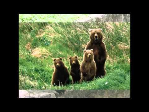 Một số hình ảnh về con gấu