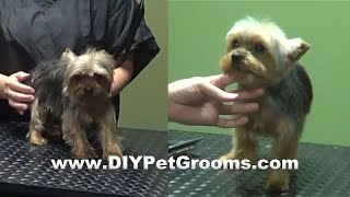 "How To Groom A Yorkshire Terrier ""yorkie"" (puppy Cut) - Do-it-yourself Dog Grooming"