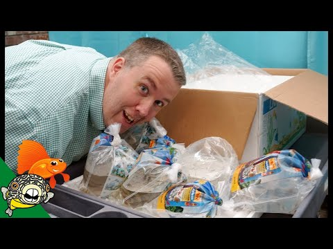 I TOOK SOME FISH HOME! TROPICAL FISH UNBOXING