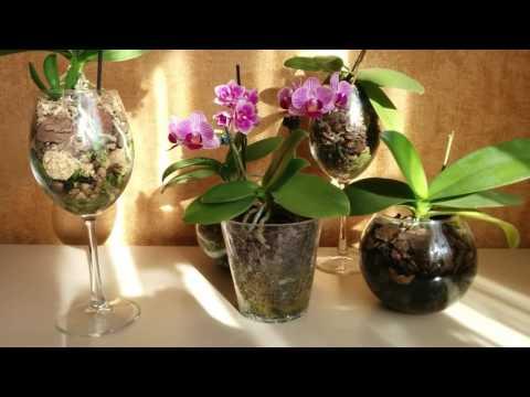 Мини орхидейки особенности ухода
