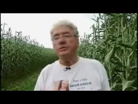 Sorghum Farm in Ohio - America