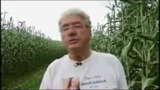 Sorghum Farm in Ohio - America's Heartland