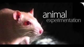 mezcla humanos-animales
