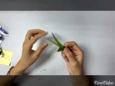 Cách làm châu chấu bằng lá dừa