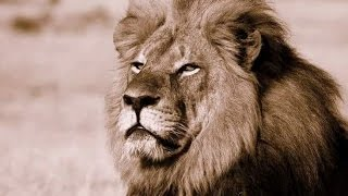 Prayer for Cecil the Lion Jul 30 2015 --with The Goddess Temple of OC