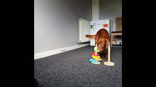 Smart Dog Stacking and Unstacking Rings for a Treat