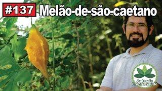 Autor da Própria Saúde - Melão-de-são-caetano [câncer, diabetes, HIV, gastrite] thumbnail
