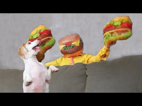 Dog vs. Cheeseburger Man: Funny Dog Maymo
