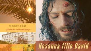 Ususret Cvjetnici: Antiphona - Hosanna filio David