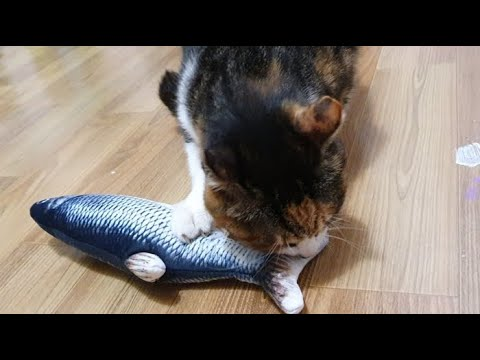Moving Fish Cat Toy Review 2020 - Does It Work?