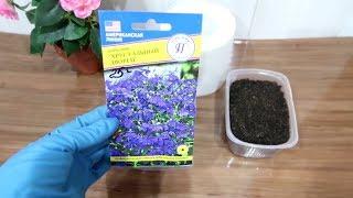 НЕОБЫЧНЫЙ СПОСОБ посадки мелких семян