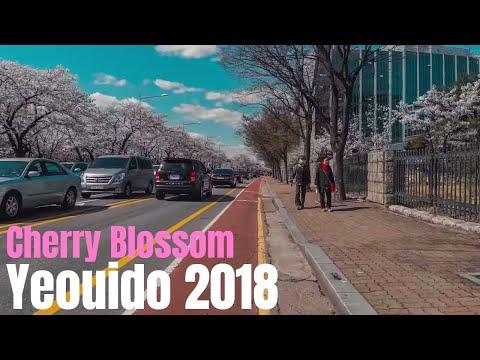 2 - Yeouido Cherry Blossom Festival 2018 (여의도 벚꽃축제) in Seoul Korea