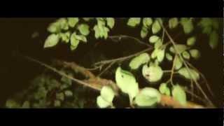 eRRdeKa x Janisis - BUNTES TREIBEN (Official HD Video)