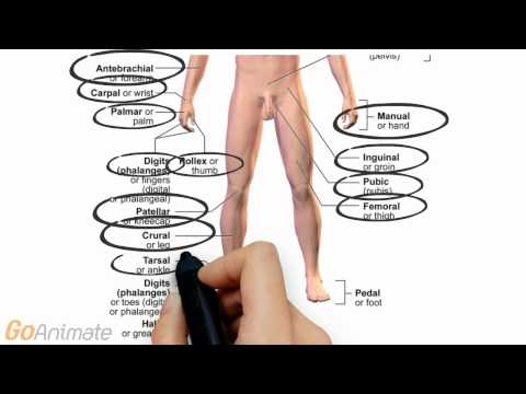 Anatomy and Physiology: Anatomical Terms, Planes and Abdominal Regions