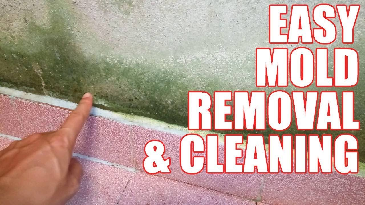 How to Get Rid of Mold in House – Cleaning & Removing Mold ...