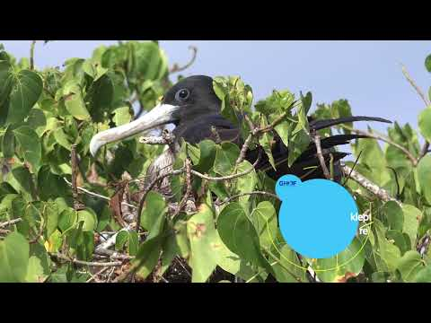 Booby Pond Nature Reserve Little Cayman - Expedition Notebook