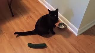 Убойное видео!!! Супер прикол 2018 Кошки против огурцов