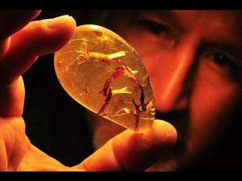 Как добывают и находят янтарь