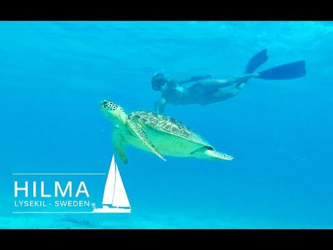 Hilma Sailing, snorkeling with turtles in the Grenadines and the beautiful Tobago Cays, Ep 15